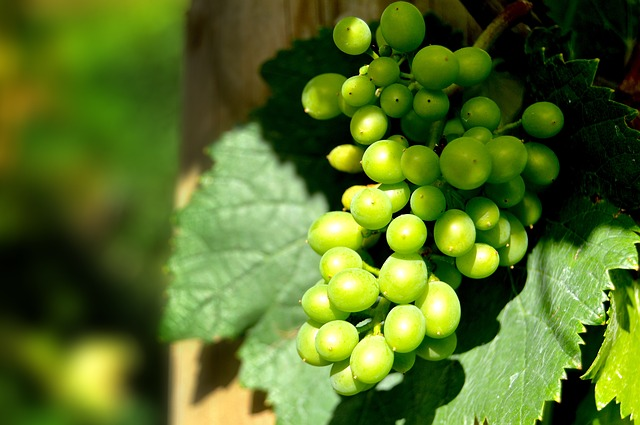 augengrapes